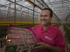 Carl Mastronardi holding a box of strawberries
