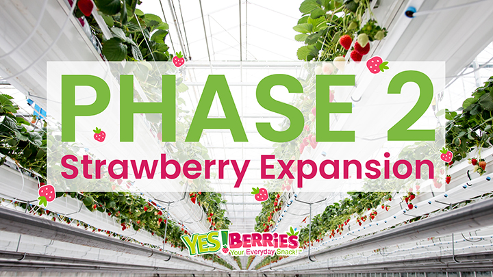 Second Phase of Strawberry Expansion
