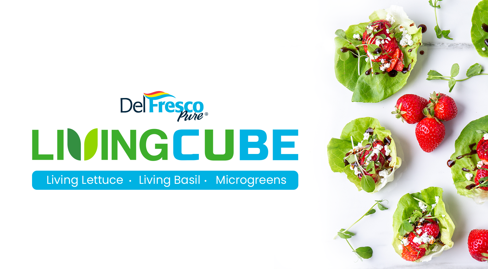 Living-Cube-Website-Home-Page-Transisitoning-Image